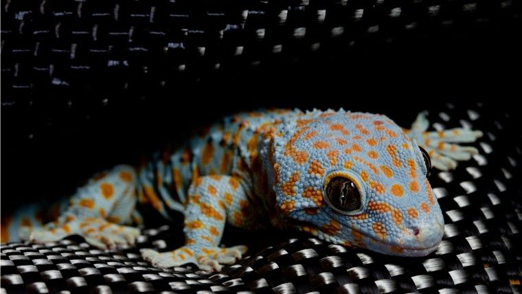 Commercial reusable sticky tape such as Geckskin™ is based on the natural dry adhesive mechanism of Gecko Feet (image courtesy of Geckskin™)