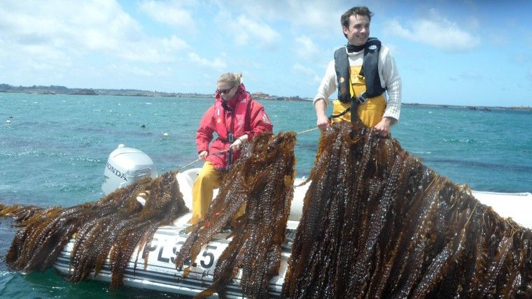 Energy from Seaweed