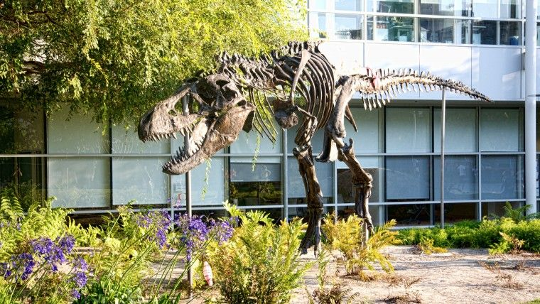 A model dinosaur skeleton at Google HQ in San Jose
