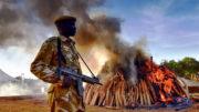Ivory trade ban