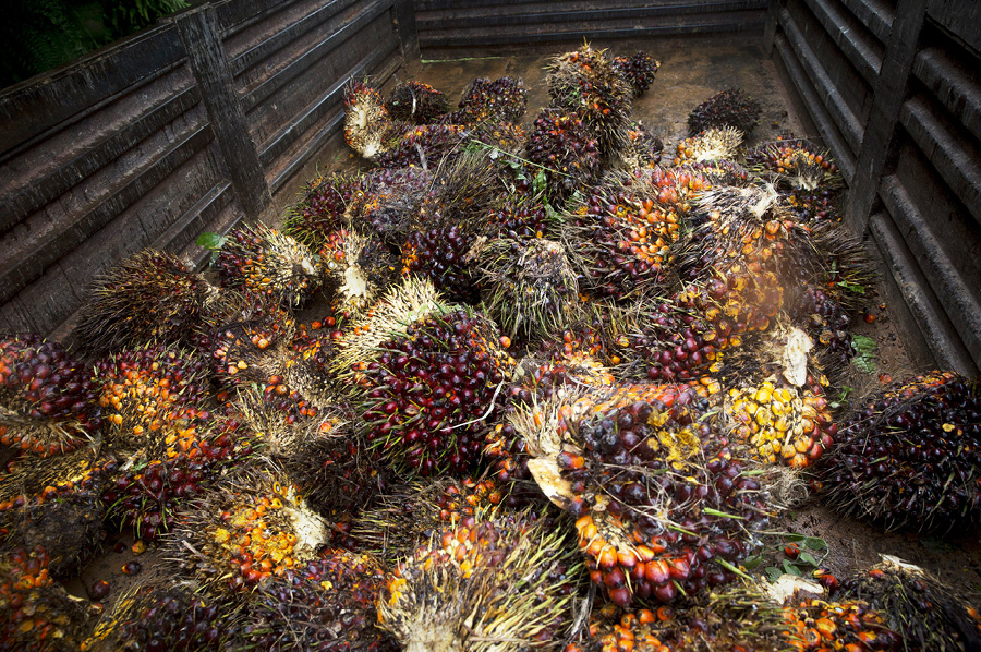 Palm fruit in a a trailer