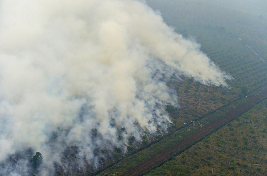 Palm oil forest destruction