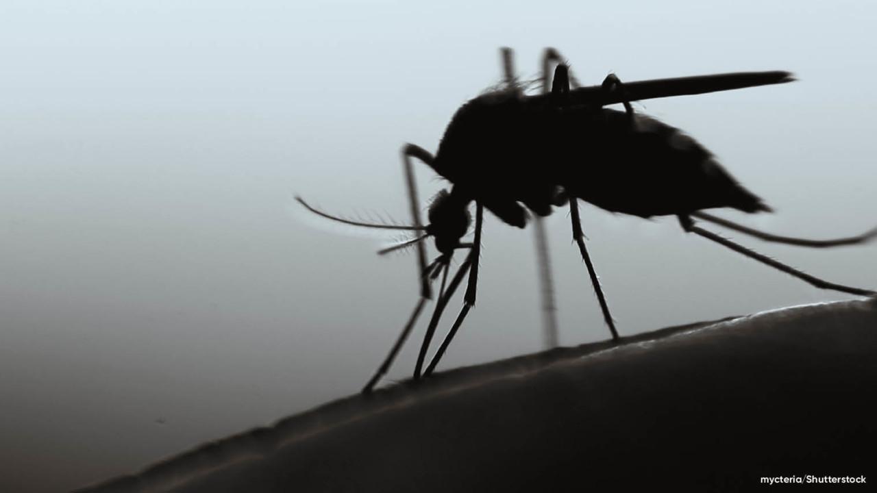 Cloud humanitarian - malaria