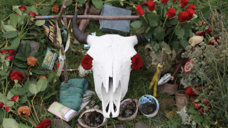 Fresh red roses protrude through the eye sockets of a sun-bleached buffalo skull on an outdoor altar.