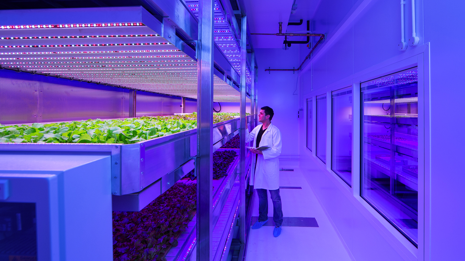 Food grown in lab with LED lights
