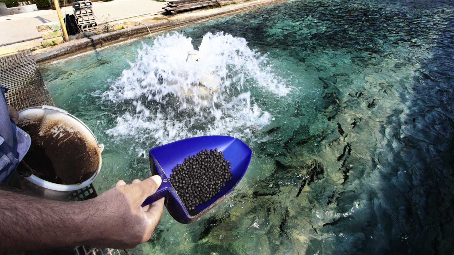 Fish being fed