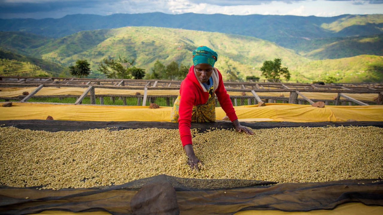 Woman working in coffee production