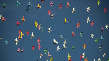 Multi-coloured birds