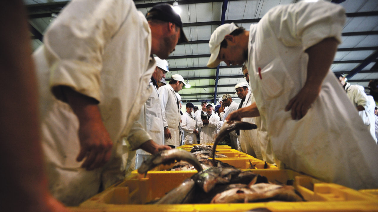 fish traders at grimsby's fish auction house food