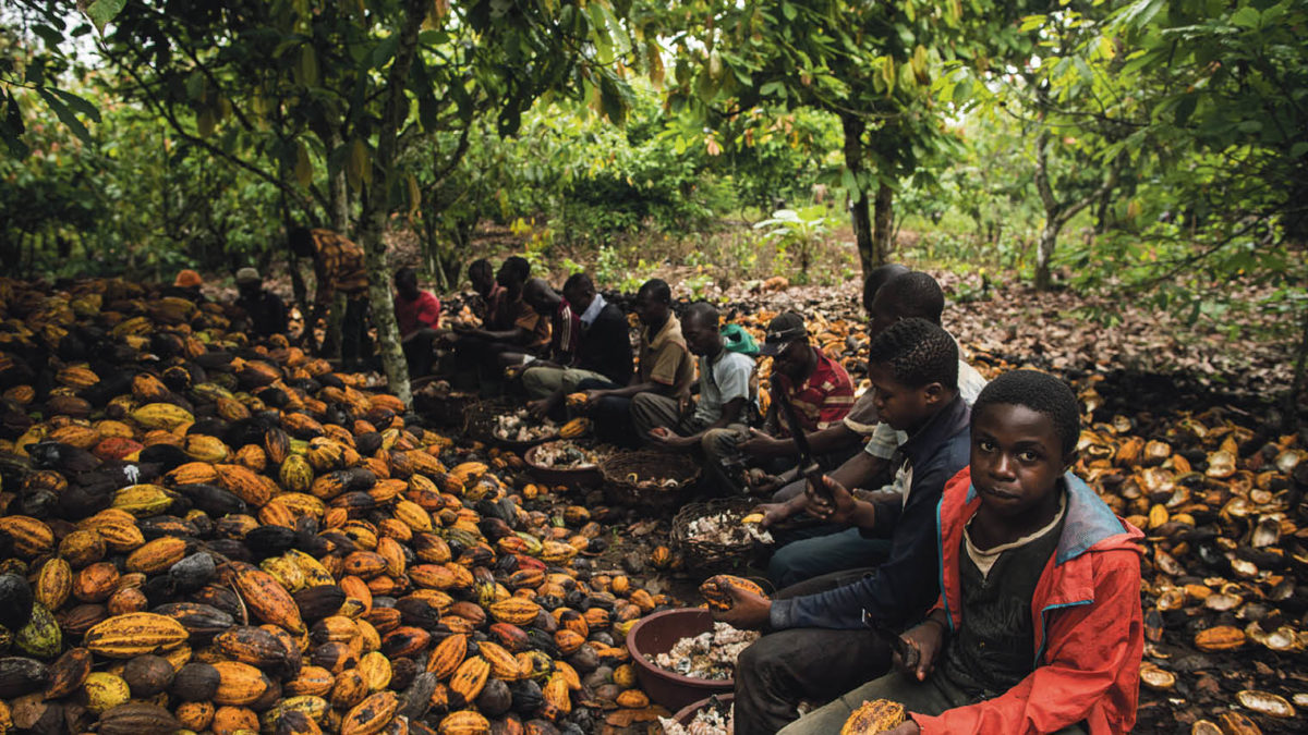 child labourers on cocoa farm in Côte d'Ivoire