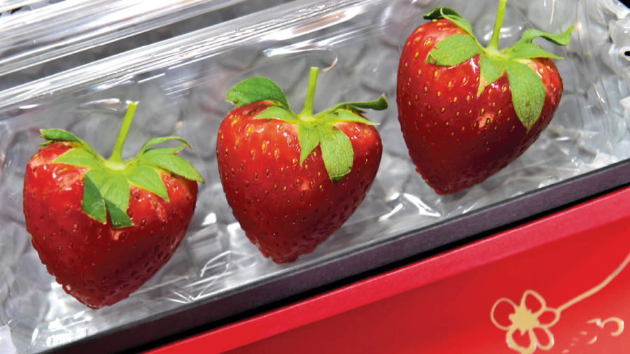 individiaully packaged strawberries