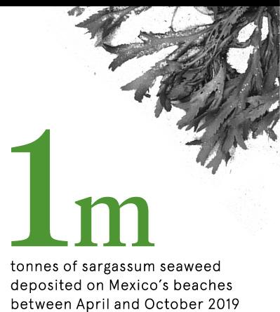 Seaweed pull stat