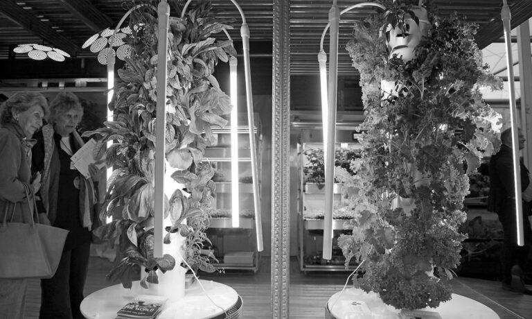 Vegetables Chelsea Flower Show
