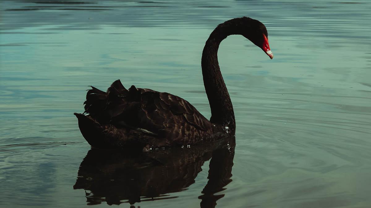 Black swan insurance